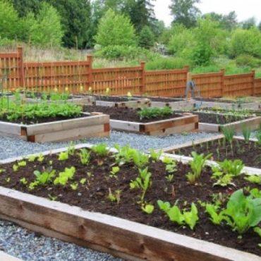 agriculture-urbaine-angers-actualite-bertrand-demanes